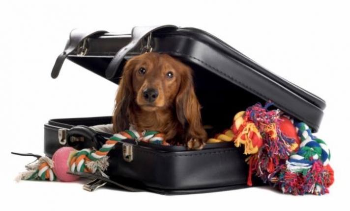 Cum să transportați în avion animalele de companie